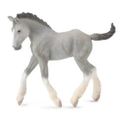 Shire Paard Veulen Grijs