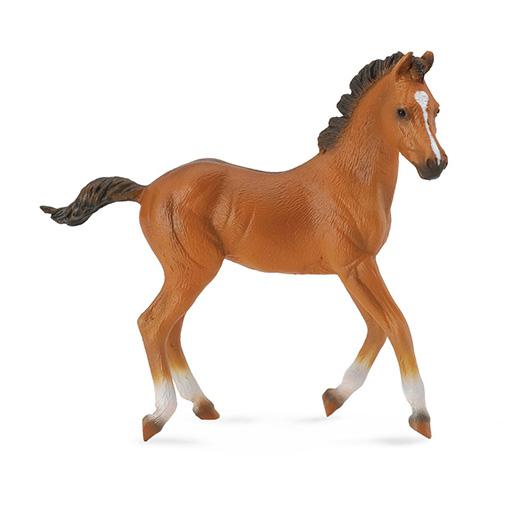 Quarter Paard Veulen Sorrel